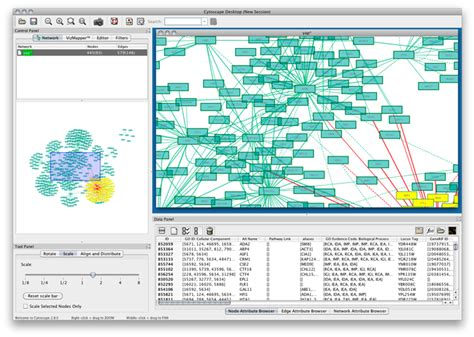 network graph software cytoscape winner for large scale graph