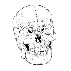 skull coloring page free printable skull coloring pages for