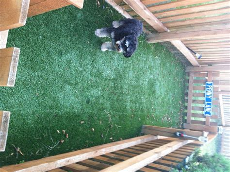dog runners for backyards dog runs dog run perfect turf patio and backyard