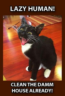 funny cat meme refrigerator magnet    angry clean