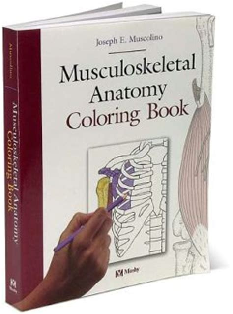 musculoskeletal anatomy coloring book free musculoskeletal anatomy coloring book edition 1 by