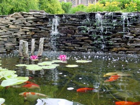 Backyard Coy Ponds by Make Fresh Your Backyard With Beautiful Koi Fish Ponds Koi