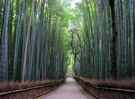 Imagenes Asombrosas Y Bellas | caminos asombrosos senderos y bellas carreteras del mundo