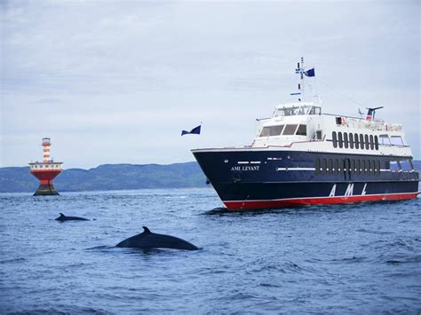 boat tour quebec whale watching cruise rivi 232 re du loup boat tours