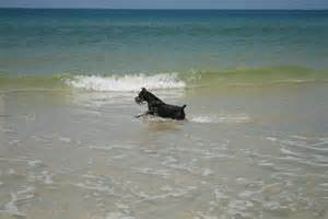 pet friendly beaches g3 realty group llc