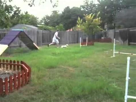 backyard dog agility course 17 best images about dog agility on pinterest for dogs