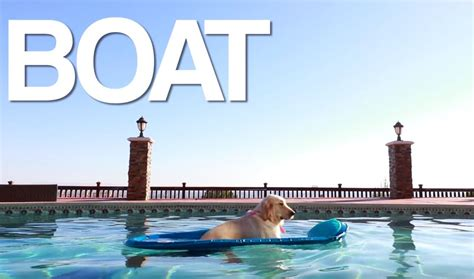 boat dog by markiplier boat dog is the hero you never knew you needed video
