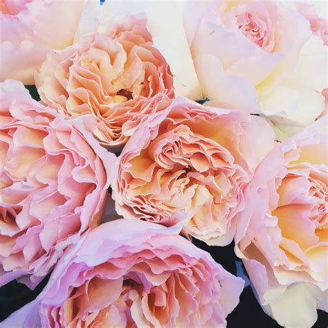 wouter s top 3 scented roses