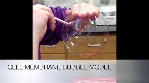 cell membrane transport images  pinterest