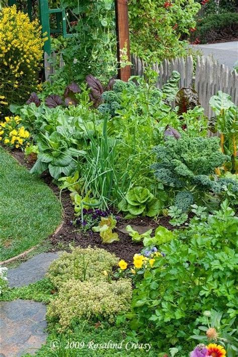 edible backyard plants edible landscape groenten groeien pinterest