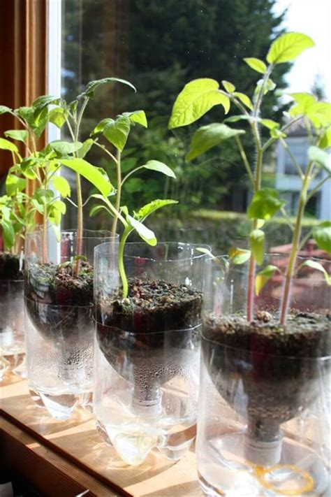 recycled bottle planters diy