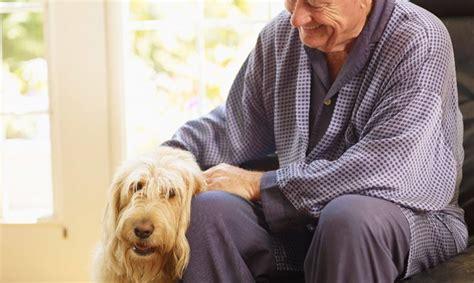 perros con personas beneficios de los perros en personas mayores