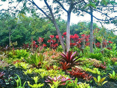 bromeliad garden with red ti background order tropical flowers direct from kauai hawaii