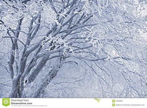 frosted tree stock image image 12539001