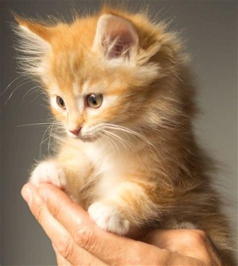 alimentazione gatti piccoli gatti e gattini appena nati