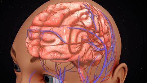 imagenes mentales integradoras cerebro humano funciones y partes con im 225 genes
