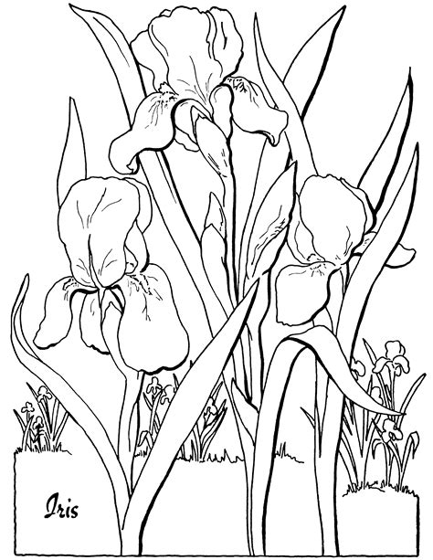 florals a coloring book for adults coloring collection books free floral coloring page the graphics