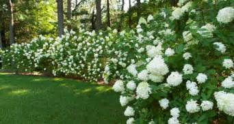 Terrascapes   Landscape & Garden Design, Installation