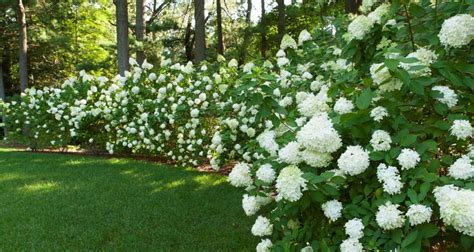 Bed Of Roses Meaning Terrascapes Landscape Amp Garden Design Installation