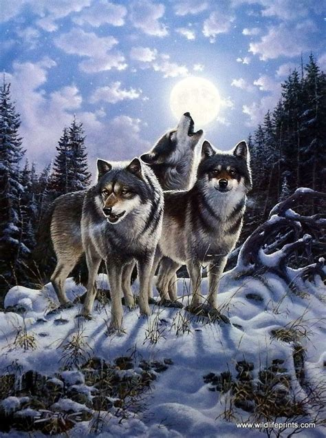 10 best wolf makeup images on pinterest artistic make up wolves wolves art and the pack on pinterest