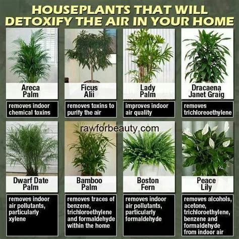 indoor plants to clean air plants to clean air health pinterest