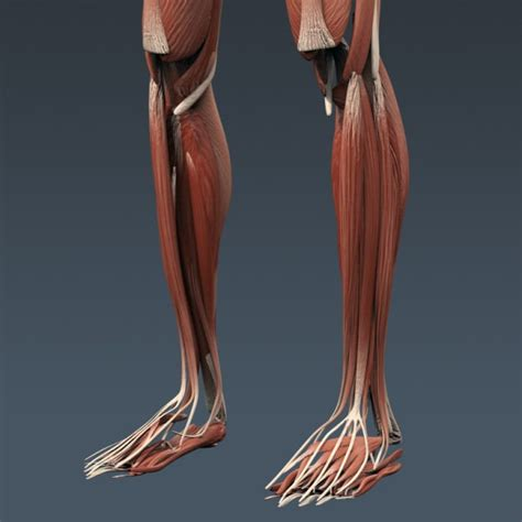 Space Saving Kitchen Gadgets by Human Female Anatomy 3d Model Max Obj 3ds Fbx C4d