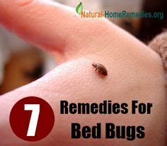 bed bugs cure bug remedies on pinterest ants insects and repel mosquitos