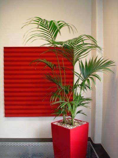piante da appartamento con poca luce piante da appartamento con poca luce pagina 3