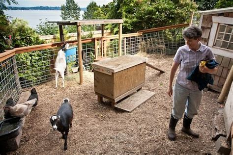 backyard goat farming backyard goats provide more than milk for urban farming enthusiasts organic authority