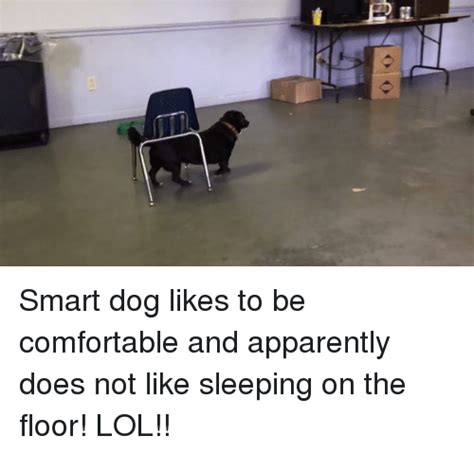 how to make sleeping on the floor comfortable 25 best memes about smart dog smart dog memes
