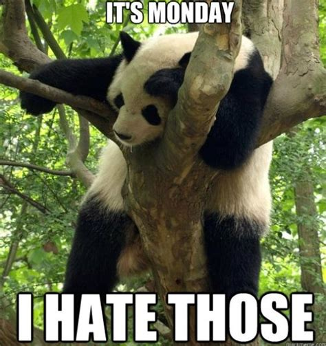 Funny Monday Memes - funny i hate mondays meme and lol