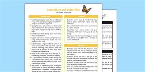 new year fact sheet ks1 caterpillars and butterflies fact sheet for adults eyfs