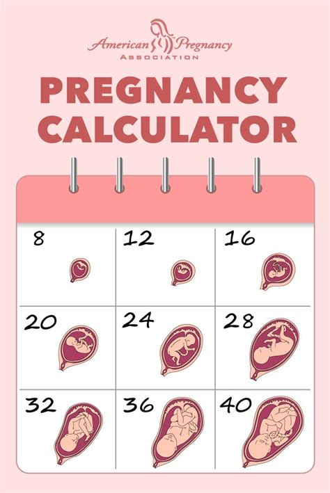 Calendar Calculator Days Of The Week 25 Best Ideas About Pregnancy Calculator On