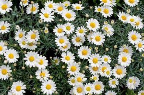fiori immagini da scaricare fiore fiori scaricare foto gratis