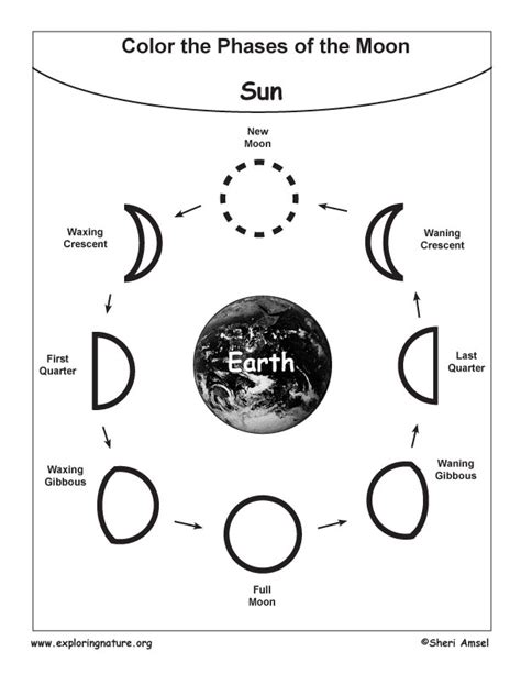 coloring pages of the moon s phases search results for moon phases elementary worksheet