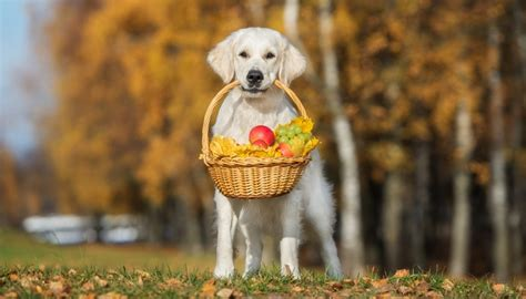 fruits dogs can eat 6 best fruits dogs can eat and likely must according to science