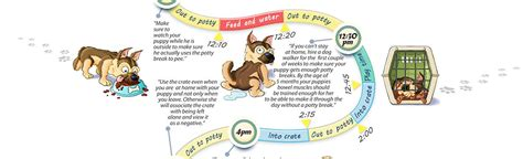 house breaking a puppy potty schedule how to housebreak a puppy infographic