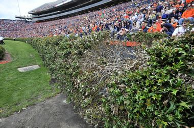 auburn fans in bushes kick six grass at auburn s hare stadium