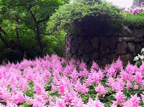 Pink Garden amazingly pink garden by misterkyle on deviantart
