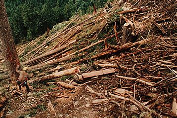 Which Biome Is Logging Hardwood Trees - human impacts temperate broadleaf forest