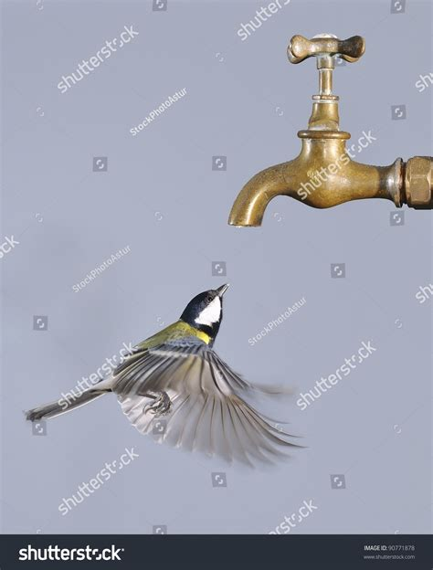 flying bird to drink from a tap stock photo 90771878
