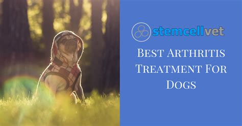 arthritis medication for dogs best arthritis treatment for dogs stem cell vet uk