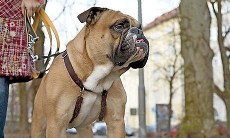Englischer Garten Hunde Leinenpflicht by Leinenzwang F 252 R Gro 223 E Hunde Bayern Nachrichten