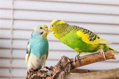 requirements   pet bird vet  murfreesboro