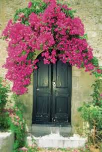fast growing climbing plants for trellis what is a bougainvillea arbor home guides sf gate