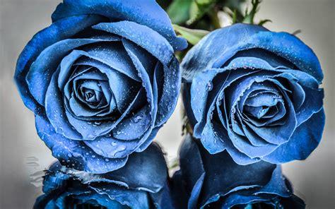 Blume Mit Rosa Blüten by Die 73 Besten Blaue Hintergrundbilder
