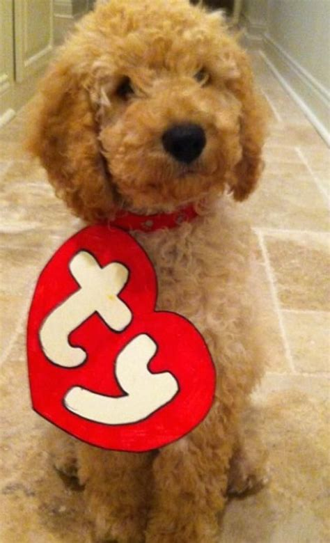 diy puppy costume 6 diy costumes the