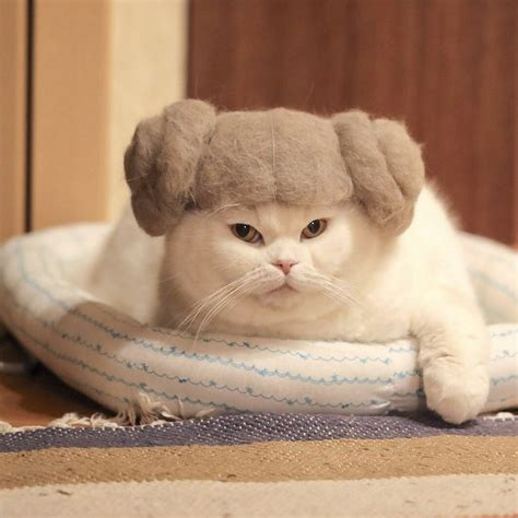 Cat Beret Hat these 100 cat hair cat hats by ryo yamazaki are going viral