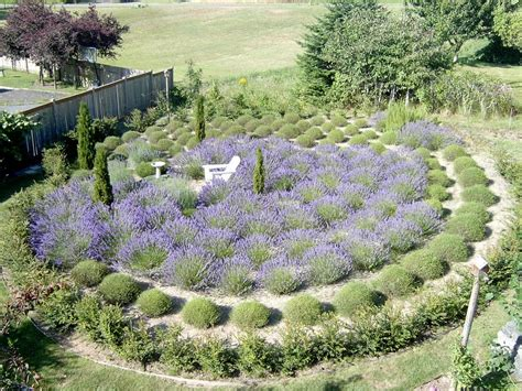 lavender labrynth susan harrington following the lure of lavender discover lavender