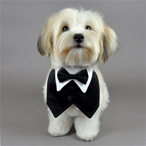 puppy tuxedo black satin formal vest and matching bowtie for dogs pit bull wedding accessories